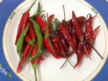 Bird's Eye Chili/Siling Labuyo/Thai Chili Pepper