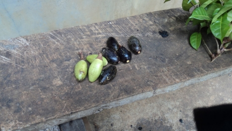 PILI fruits